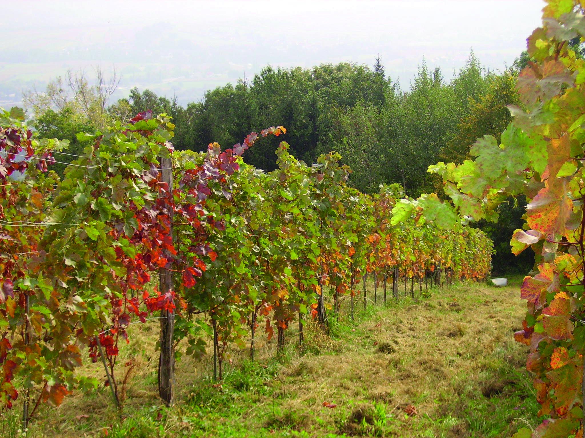 Weinbau Fam. Schmallegger