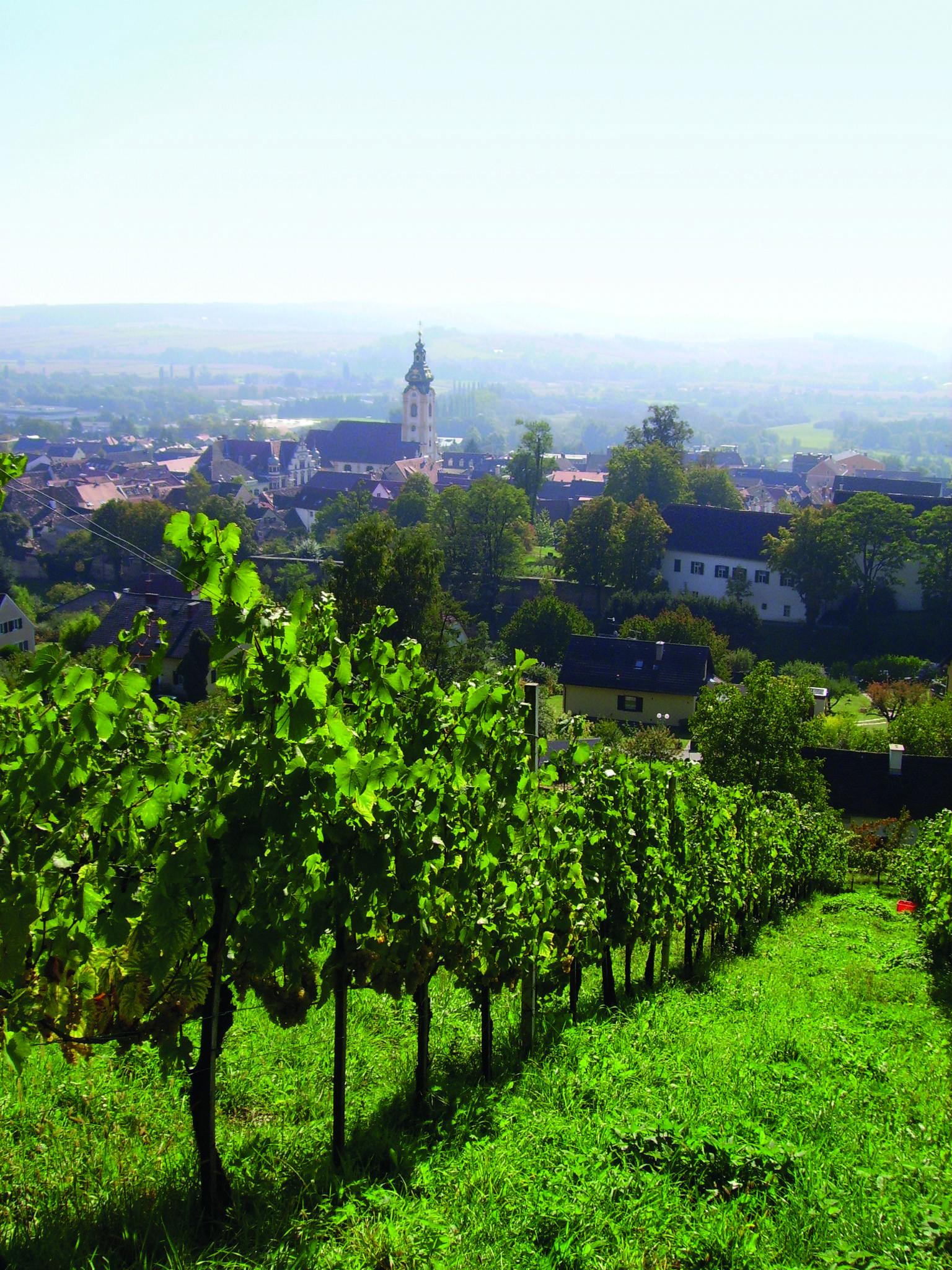 Weinstöcke über Hartberg